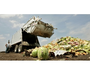 Food Waste:  How Finding A Solution Could Improve Lives in Prince William